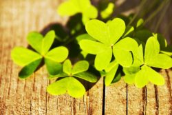 Beyond Green Beer: The History of St. Patrick's Day